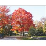 Eagle Tree & Landscaping Service logo