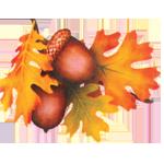 Darrach Denture Clinic logo