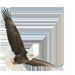DiTommaso Developments logo